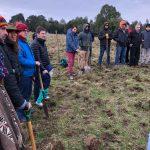 Hotel Cabaña del Lago de Puerto Varas colaboró con 150 árboles en reforestación en Chiloé