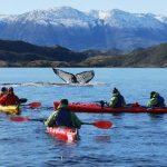 Avistamiento de ballenas: La experiencia que está deslumbrando en el Estrecho de Magallanes