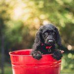 5 sencillos pasos para sacar las mejores fotos a tus mascotas